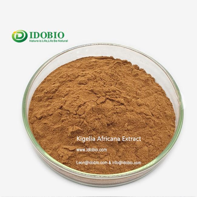 Buy Kigelia Africana Powder//Gerbera jamesonii Bolus